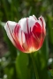 TULP World Expression