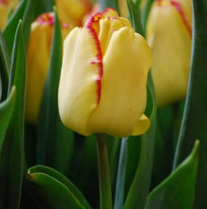 TULP Cape Town