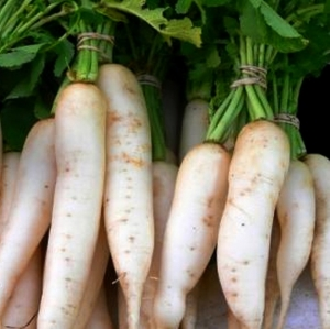 TALIREDIS 'Mino Early', Daikon