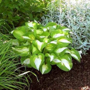 HOSTA Summer Music