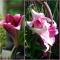 LIILIA LO Pink Heaven