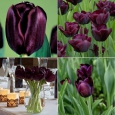 TULP Blackjack