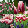 TULP Pole Position