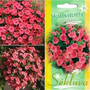 RIPP-PETUUNIA 'Salmon Velvet' F1