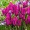TULP Purple Bouquet