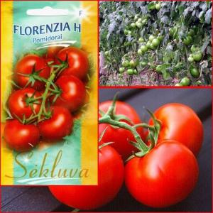 TOMAT Florenzia H