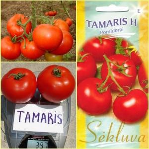 TOMAT Tamaris H