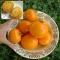 TOMAT Orange Queen