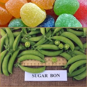 SUHKRUHERNES Sugar Bon