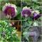 MEHHIKO VANIKKULJUS Violet Blau