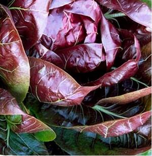 SALATSIGUR 'Palla Rossa 3'