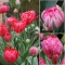 TULP Flash Point