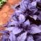 VÜRTSBASIILIK Purple Opal