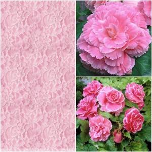 MUGULBEGOONIA Picotee Lace Pink