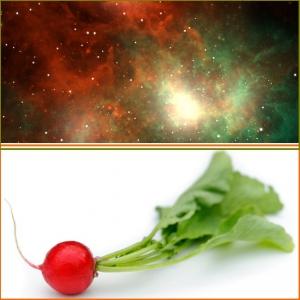REDIS Supernova