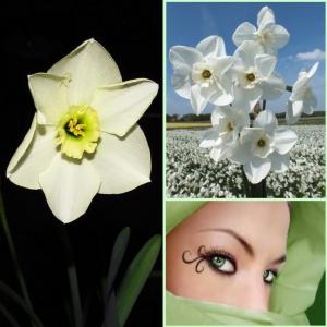NARTSISS Green Eyed Lady