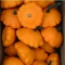 TALDRIKKÕRVITS Patisson 'Orange'