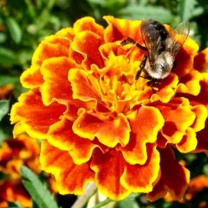 PEIULILL Honeycomb