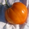 TOMAT 'Oxheart Orange'