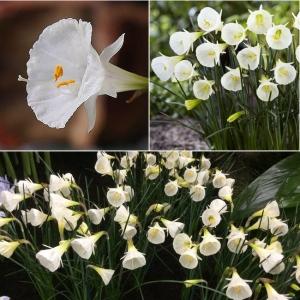 LEHTERNARTSISS White Petticoat