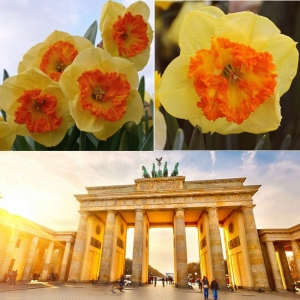NARTSISS Berlin