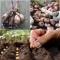PAKK taimed + seemned
