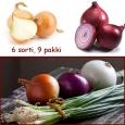 Sibula seemned 6 erinevat