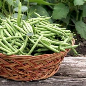 PÕÕSASUBA Harvester