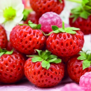 *Raspy Strawberry'