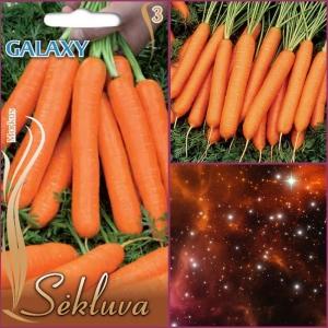 PORGAND 'Galaxy'