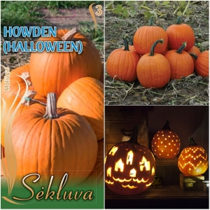 SUUREVILJALINE KÕRVITS 'Howden' (Halloween)