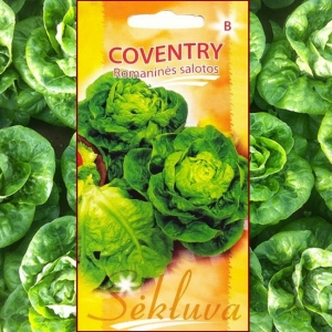 ROOMA SALAT Coventry