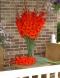 AEDGLADIOOL Red Beauty