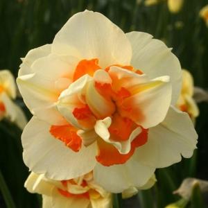 NARTSISS Flower Parade