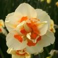 NARTSISS Flower Parade (12/14)